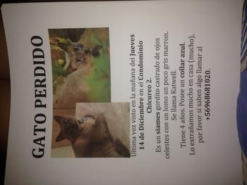 Gatito perdido! Por favor difundir